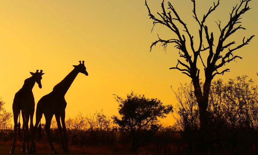 Round-trip flights from Amsterdam to SOUTH AFRICA on sale from just 328 €