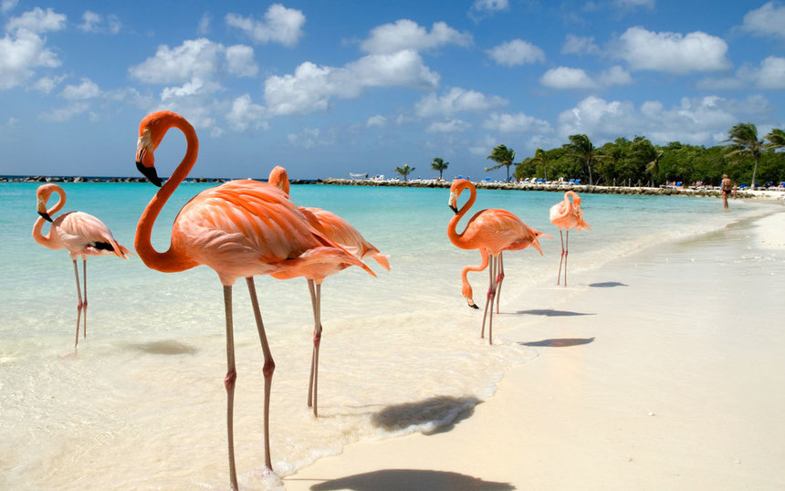 Direct return flights from Manchester to Aruba for only 269 £