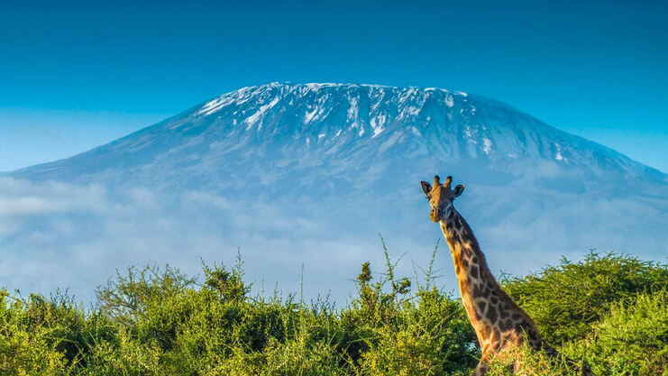 Round-trip flights from Madrid to Kilimanjaro, TANZANIA for 377 €